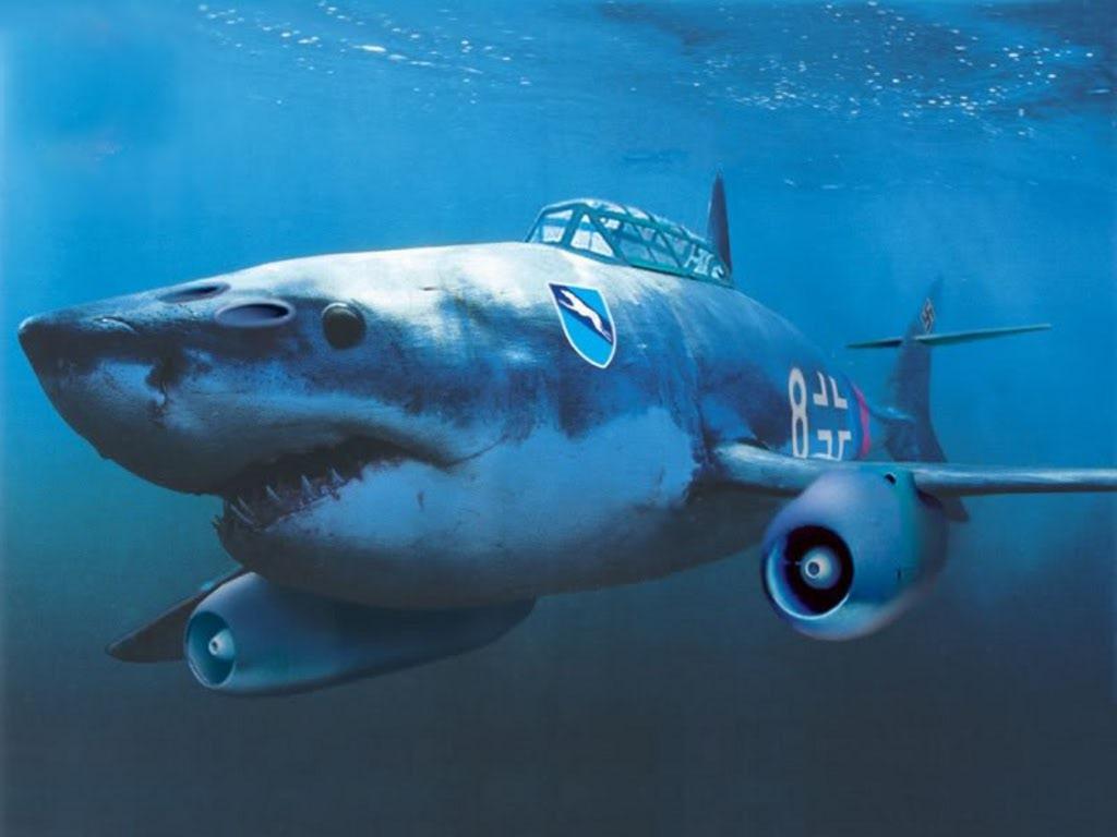 Shark me 262.jpg