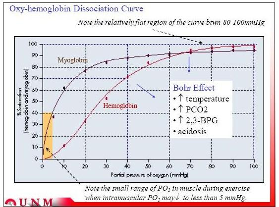 oxy and myo o2 curve.jpg