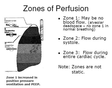 zone of perfusion.jpg