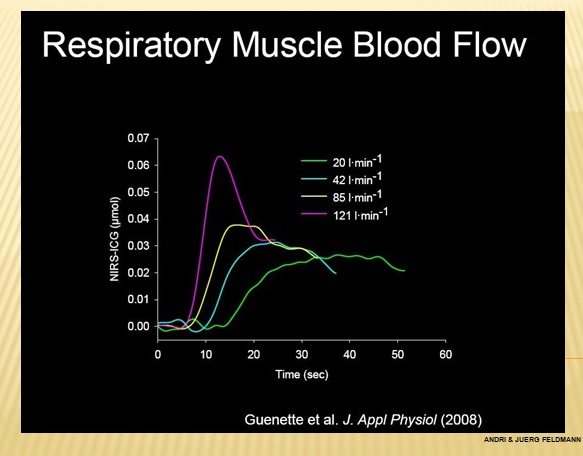 respiratroy  muscel blood flow.jpg