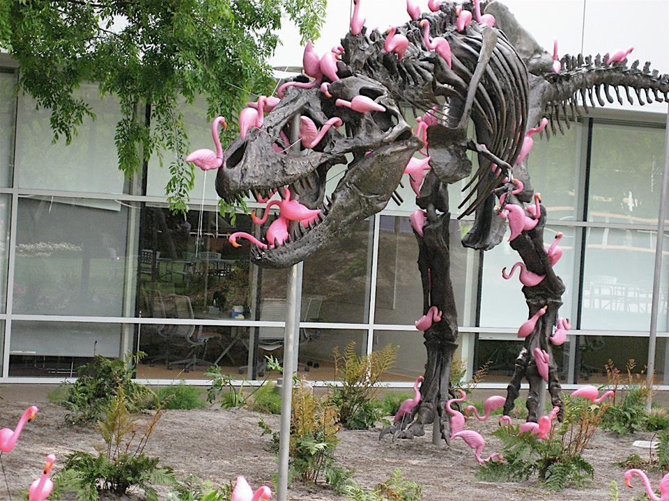 Flamingo alert.jpg