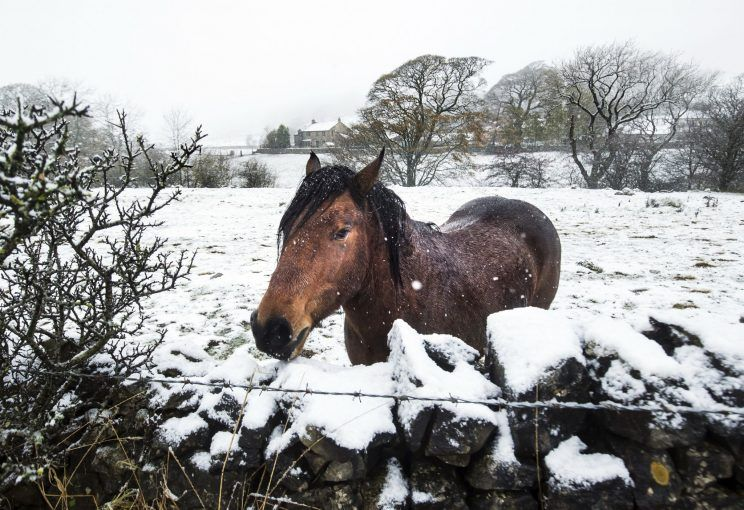 horse in snow Nov '16.jpg