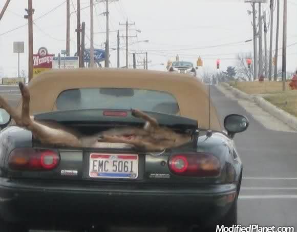 car-photo-1996-mazda-miata-dead-deer-trunk-fail.jpg