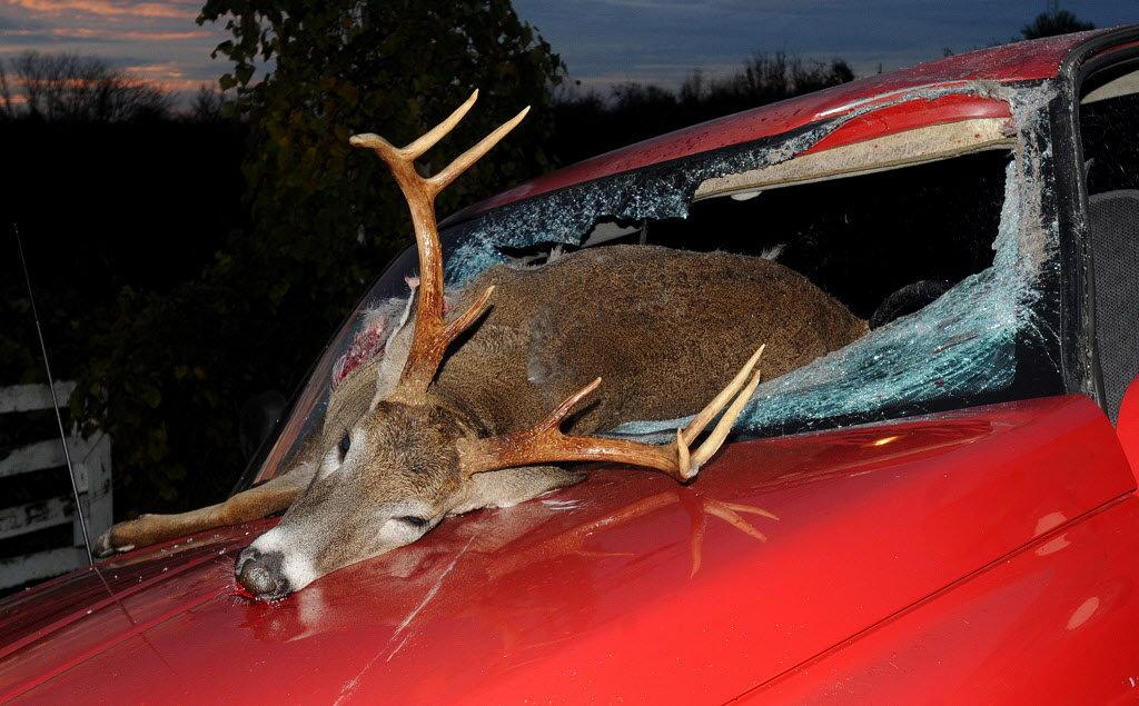 deer-accident-66bfa12507011c421.jpg