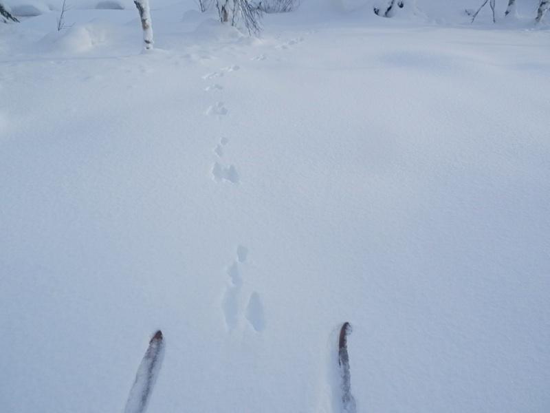 sneharer.jpg