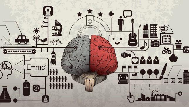brain-hemisphere.jpg