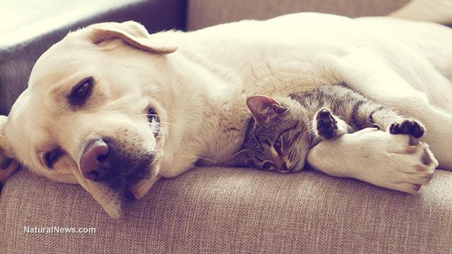 Dog-Cat-Sleep-Couch-Pets.jpg