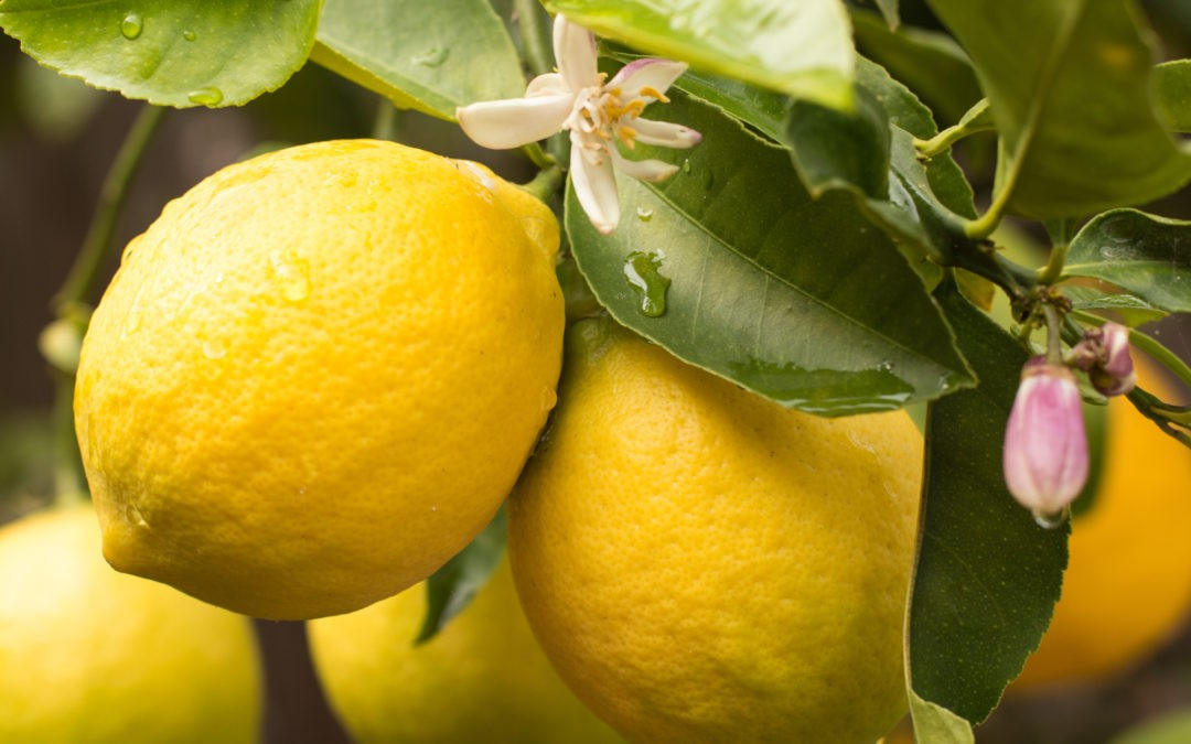Lemons-Close-e1548287690641-1080x675.jpg