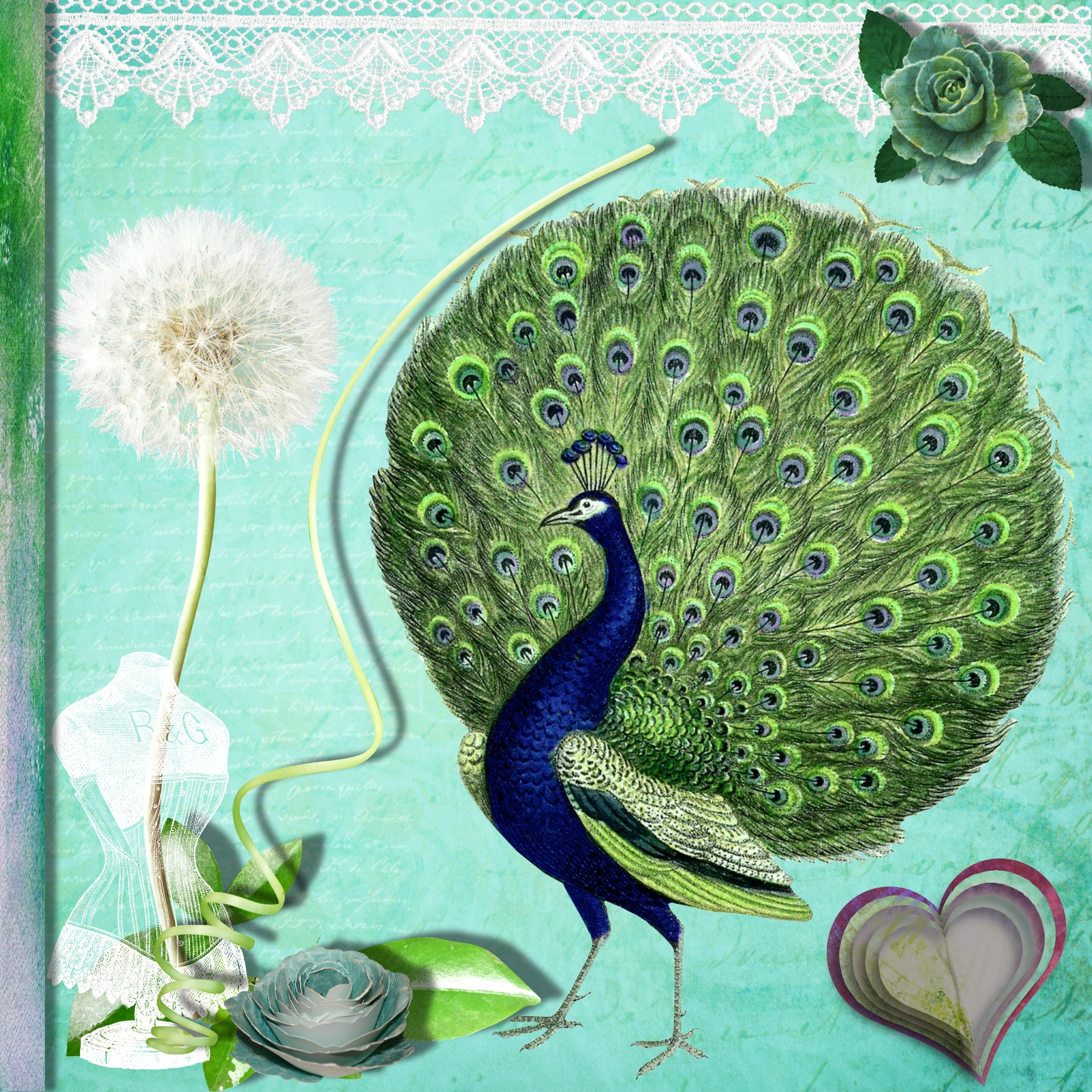 Peacocks and Lace 2.jpg