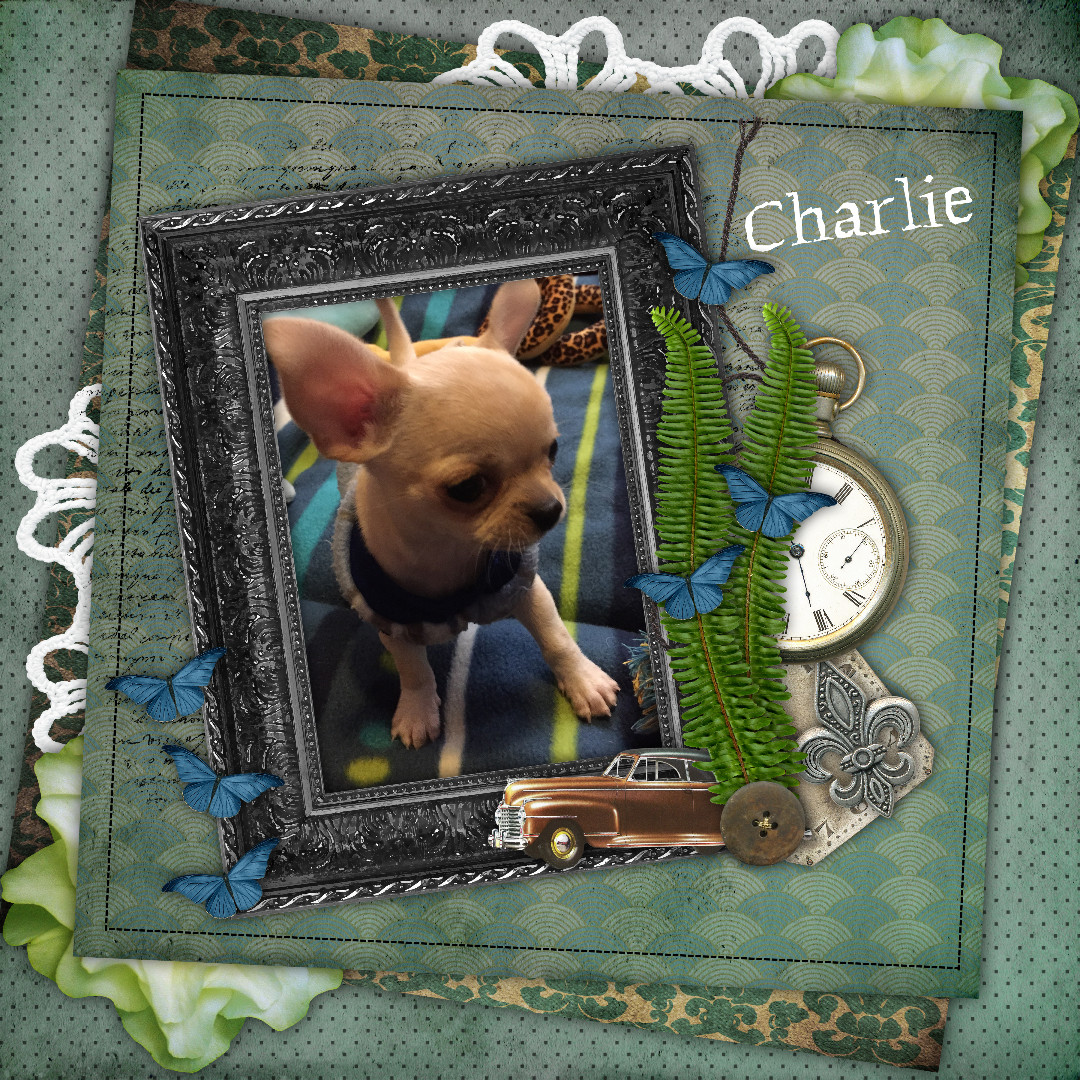 Daily designer layout-meet charlie.jpg