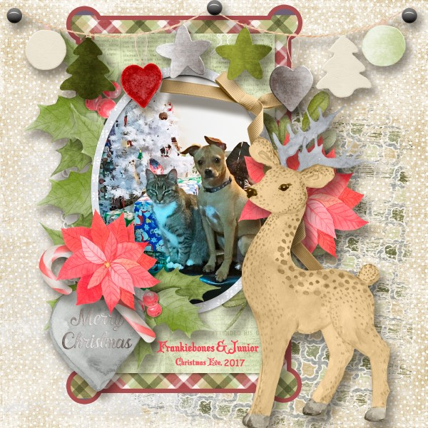 600-adb-Caribou-and-Reindeer-cb01.jpg