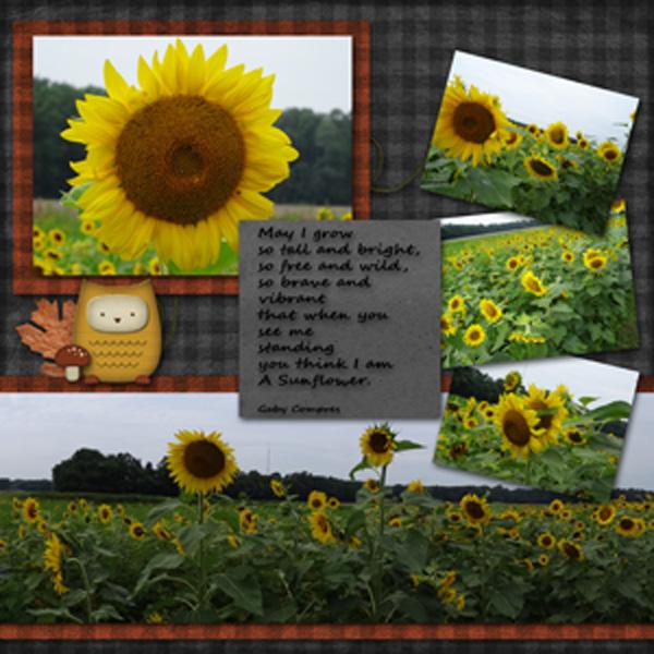 Sunflowerweb.jpg