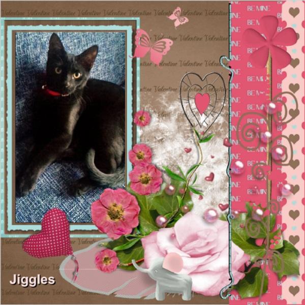 Feb. 2018 Jiggles waiting for his Valentine.jpg
