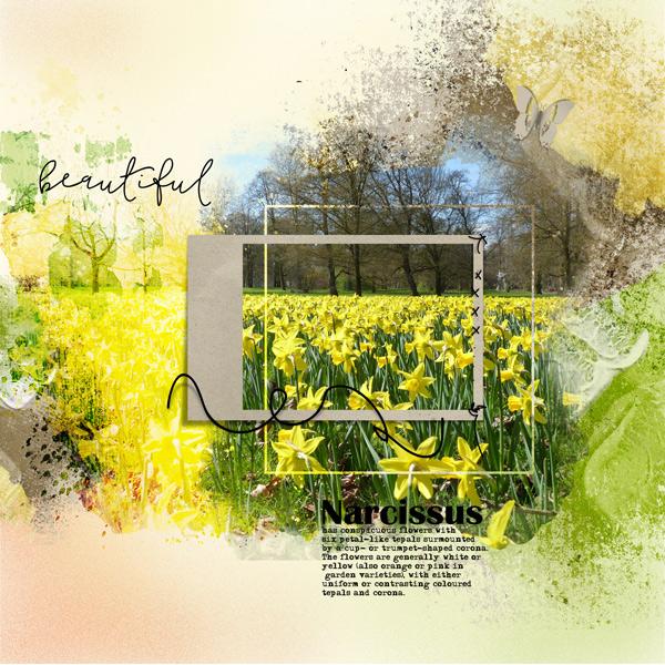 HSA_Botanical_Narcissus_layout-1.jpg
