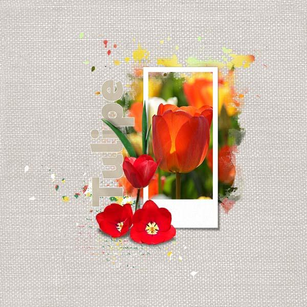 HSA_BotanicalTulipa_FWP_2.jpg