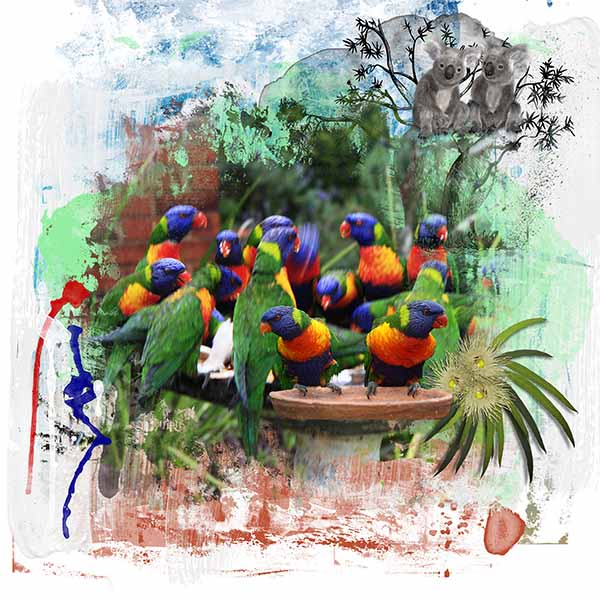 fred's birds.jpg