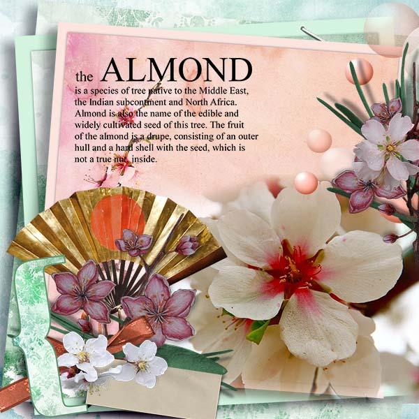 ctpageTineke-HSA_Botanical_Almond_2.jpg