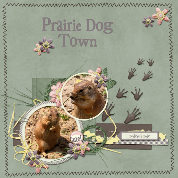 Prairie-Dogs-Kmess_SPTemplate3-2.jpg