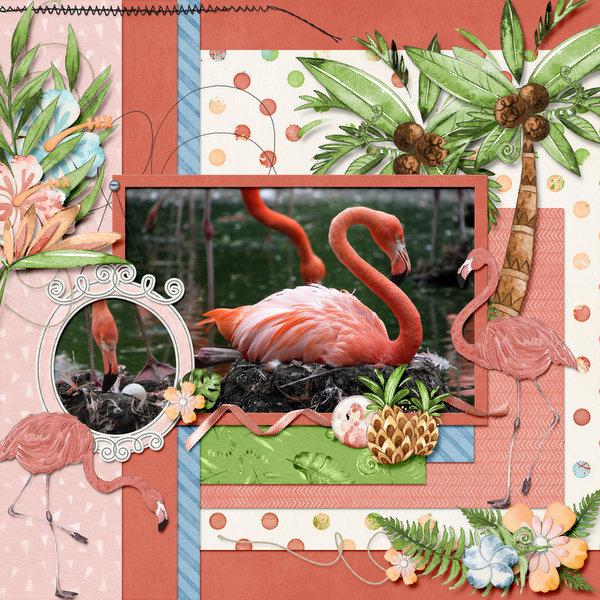TP Flamingo's.jpg