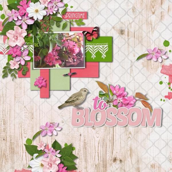 AH To Blossom 600 maureen; HSA Mix It Up #3.jpg
