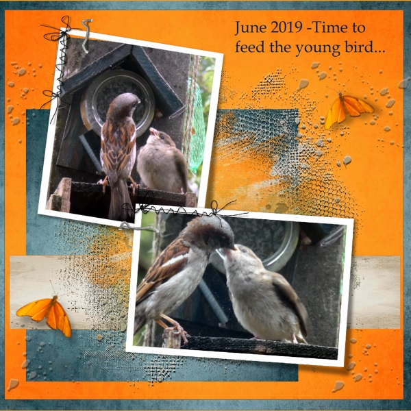 1e-June 2019 -Time to feed the young bird....jpg
