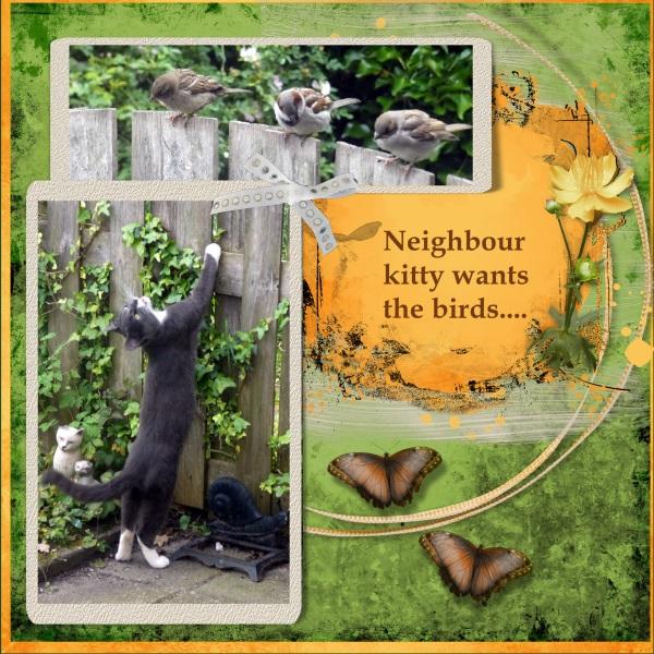 2e-June 2019 Neighbour kitty Grey....jpg