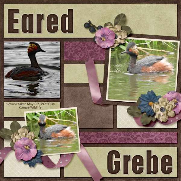 Eared Grebe paper piecing vol1 Legacy.jpg