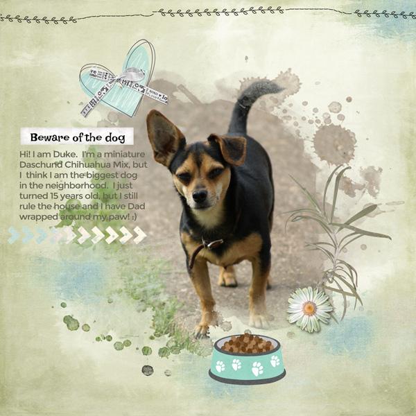 snickerdoodle-designs-love-my-dog-cathy-01-600.jpg