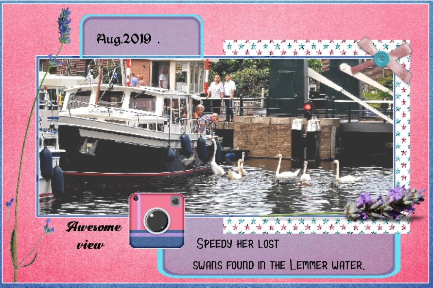 Aug.2019 Speedy her Swans....jpg