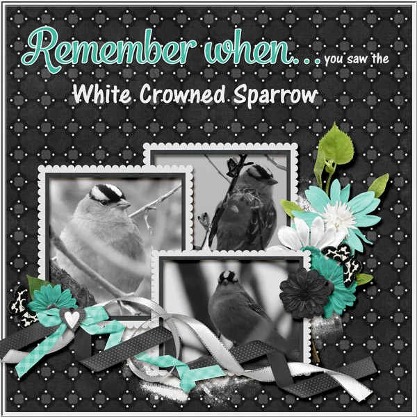 White Crowned Sparrow paint chips Piptide Teal.jpg