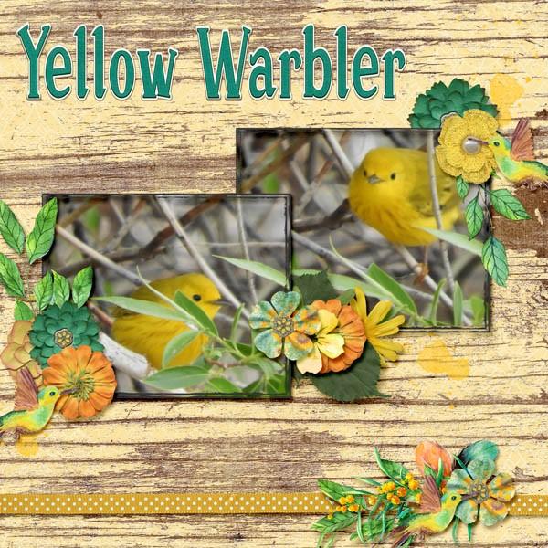 Yellow Warbler #2018 July.jpg