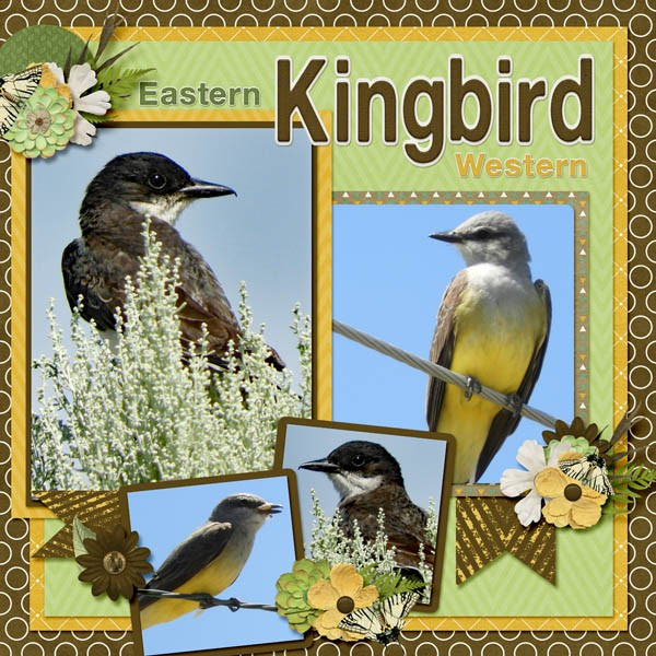 Eastern and Western Kingbird small.jpg