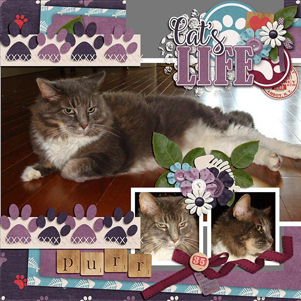 Cat's-Meow.jpg