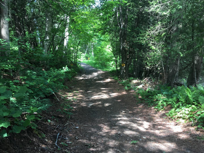 100K trail 2.jpg