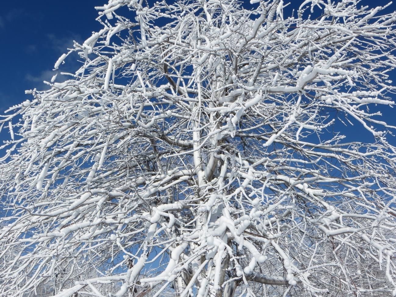 Frozen tree-1.jpg