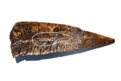 Pinna laqueata jurassic British Columbia Canada.jpg
