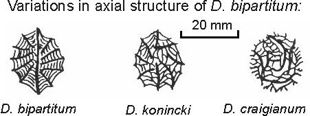 dibunvar.jpgDibunophyllum осевые структуры.jpg