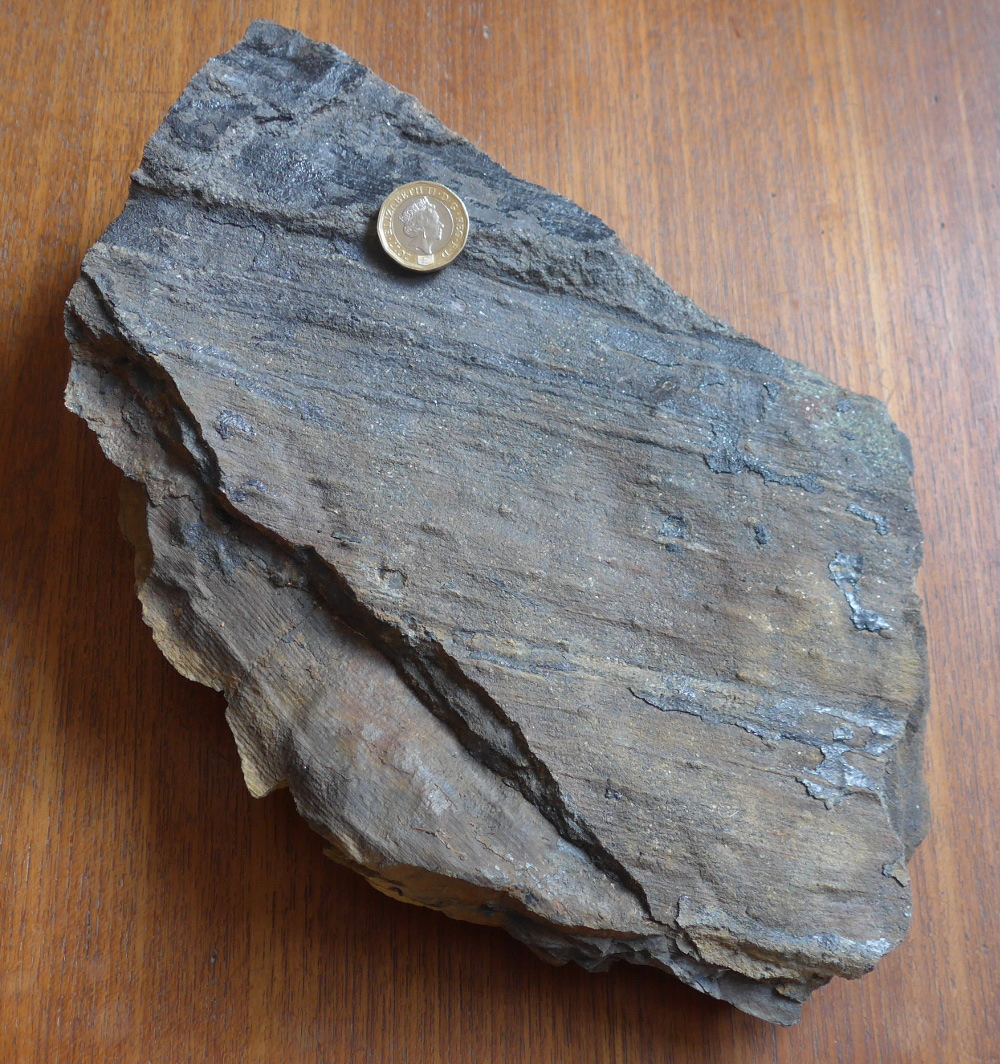 Lepidodendron w Calamites.jpg