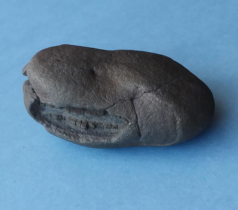 fossil01s.jpg