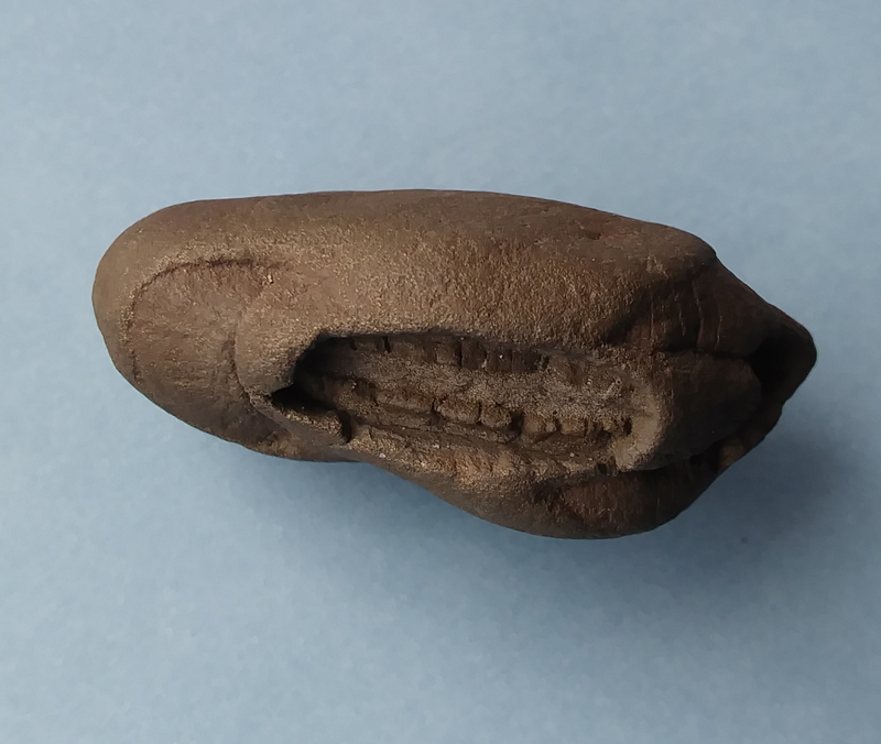 fossil04s.jpg