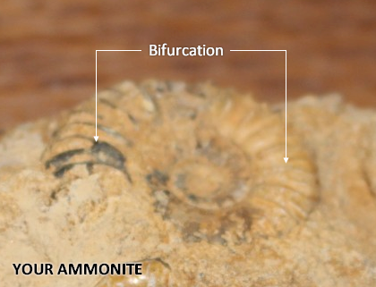WestBayFossil.png