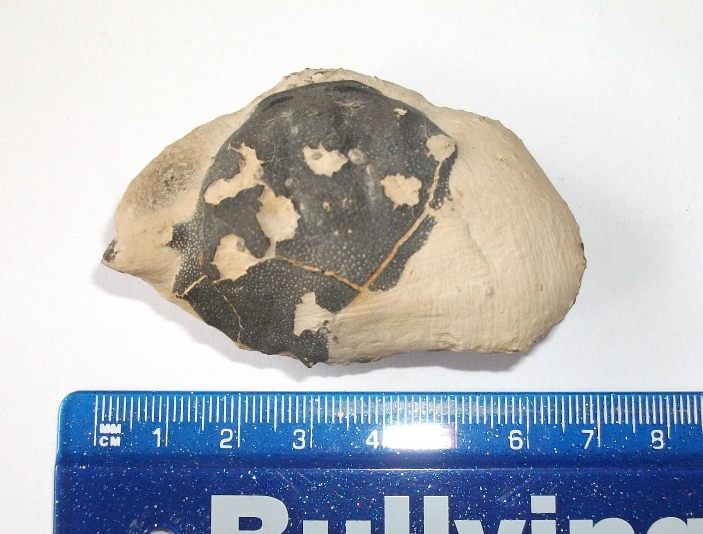 Fossils 9.jpg