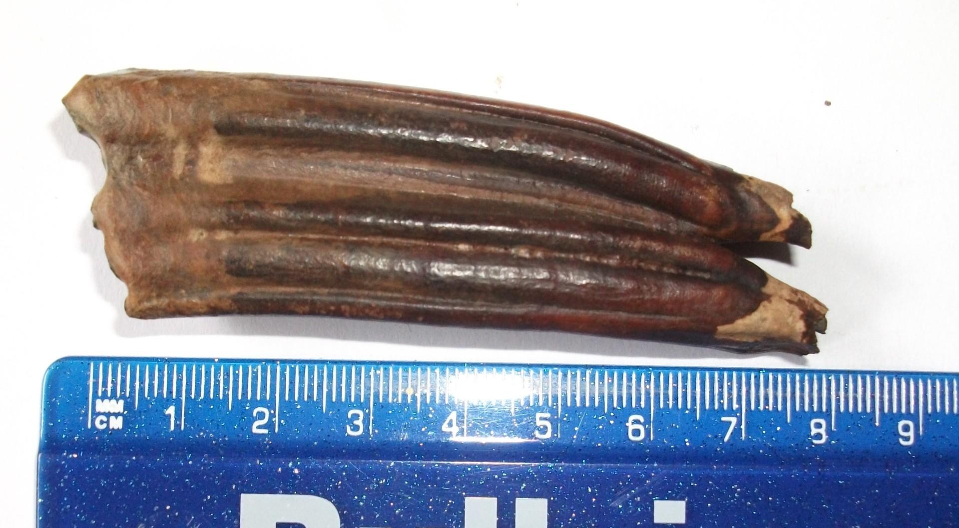 Fossils 94.jpg