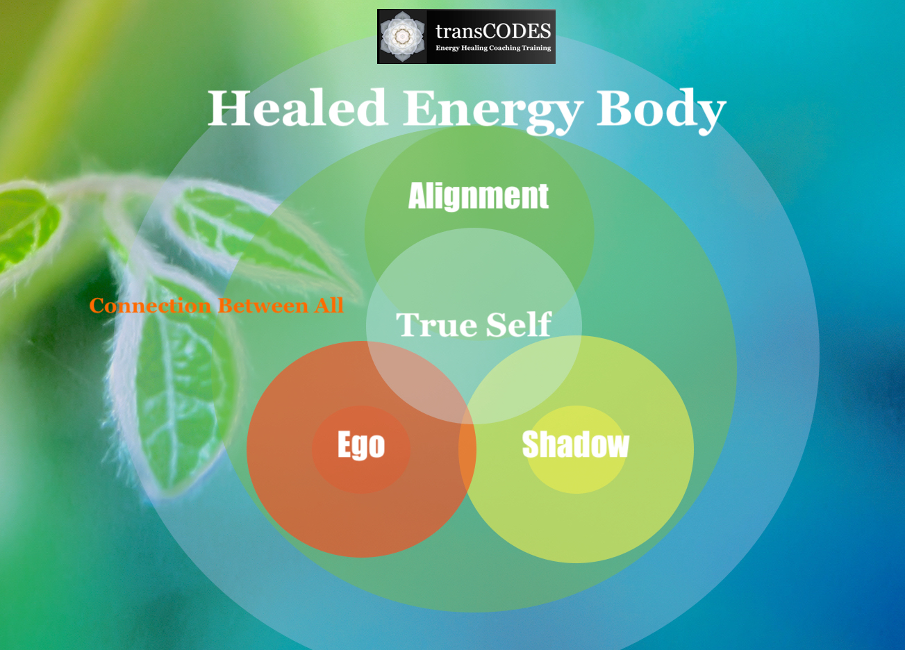 sshp infographic healed unified energy body.jpg