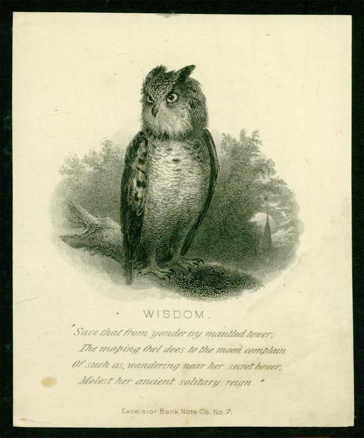 Excelsior Owl.jpg