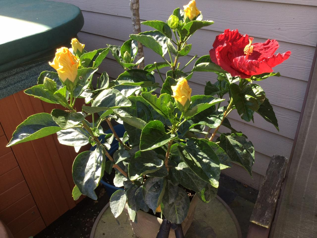 red bloom yellow plant.jpg