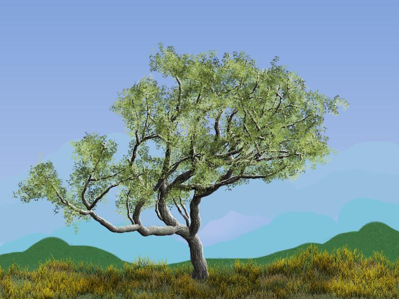 TB TreeStudio _ Essai 1.jpg
