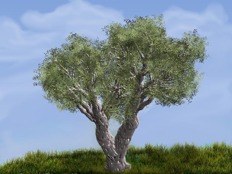 TB TreeStudio_African Olive 1.jpg