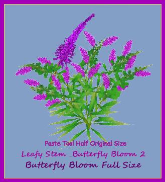 Butterfly Brushes.jpg