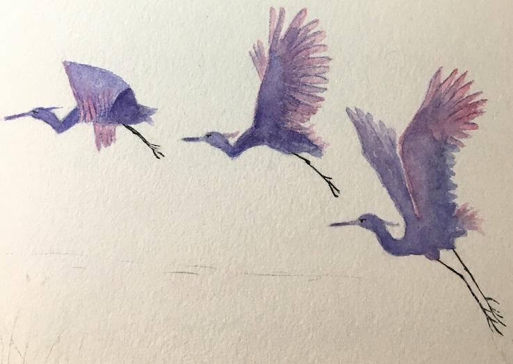 Heronswatercolor2018sml.jpg